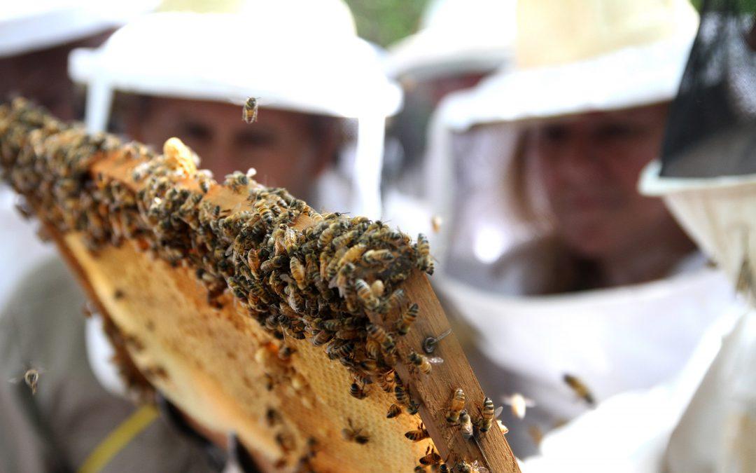 Día de las Cooperativas y Trazabilidad apícola