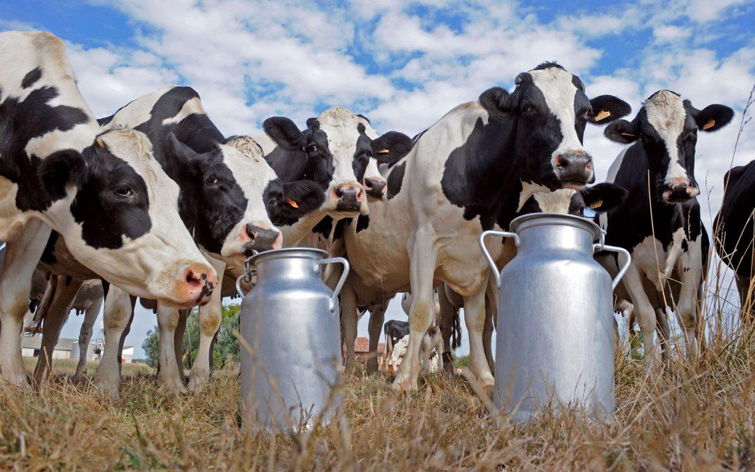 Continúa la crisis en lechería, mientras que se recupera el sector granario