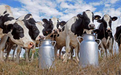 Nuevo semáforo de las Economías Regionales: signos de crisis para la actividad aviar y bovina, advertencia en el sector lechero y crecimiento del maníEn promedio, los costos muestran una suba interanual en mayo del 65%
