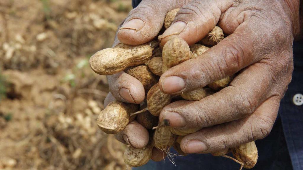 Se celebró el 8 de Octubre el Día del Trabajador Rural