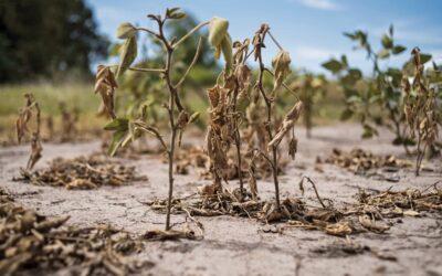 Sequía, todas las alarmas encendidasAfecta a todo el país